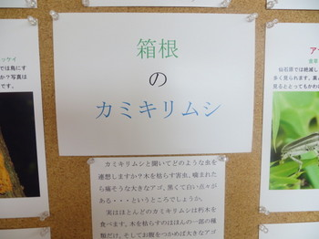IMG_9515.JPG